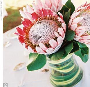 Proteas Zone 5 5 7 I Am Going To Try To Grow These In Austin Zone 7 8 Flower Arrangements Wedding Flowers Protea Flower