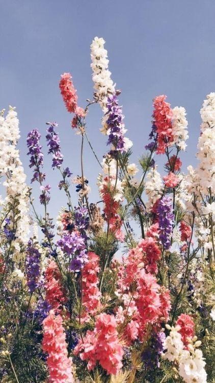Les bon gestes pour vos fleurs en cas de fortes chaleurs #fleurs #chaleur #jardin #garden #arroser