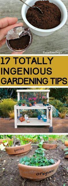 Totally Ingenious Gardening Tips Gardening, Gardening Tips, Gardening Hacks, Easy Gardening TIps, Popular Pin, Vegetable Gardening, Gardening for Beginners, Beginner Gardening Tips, Beginner Gardening HacksGardening, Gardening Tips, Gardening Hacks, Easy Gardening TIps, Popular Pin, Vegetable Gardening, Gardening for Beginners, Beginner Gardening Tips, Beginner Gardening Hacks