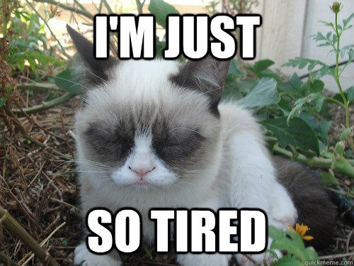 Funny Cat Meme Generator : Im just so tired poor grumpy cat {cats} pinterest grumpy cat