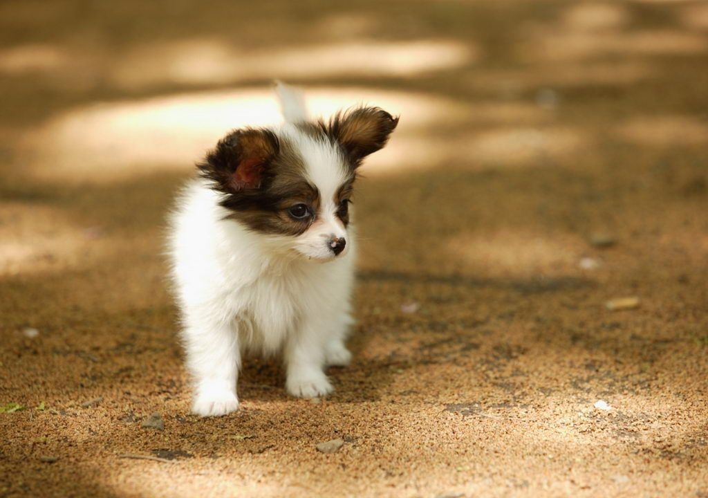 Baby Puppies for Free | ... Free Download: Puppies Amrican Beautiful New Born Baby Dogs Beautiful