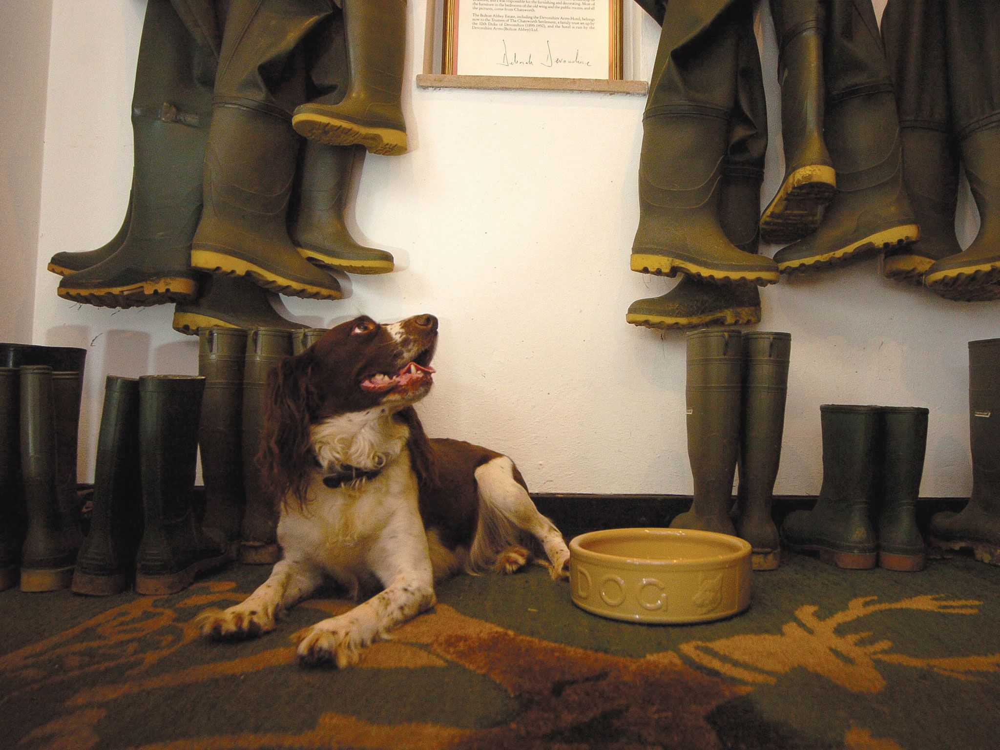 Hotel & Spa on the Bolton Abbey Estate Dog friends, Dog