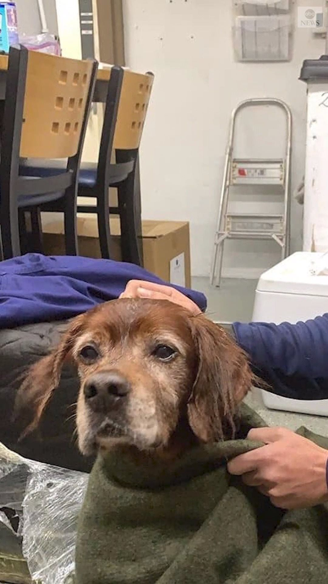 Abc News On Instagram You Re The Best Person I Ve Ever Rescued A Coast Guard Crew Saved A Dog Off The Coast Of Southwes Save A Dog Abc News You Re Awesome