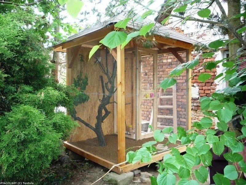 Andulka vlnkovaná - Letní voliéra s 2 korelami, 8 andulkami a 1 neofémou. Voliéra stojí na zahradě a je ze dřeva a pletiva. Větve jsou ze švestky. Na zemi je písek.