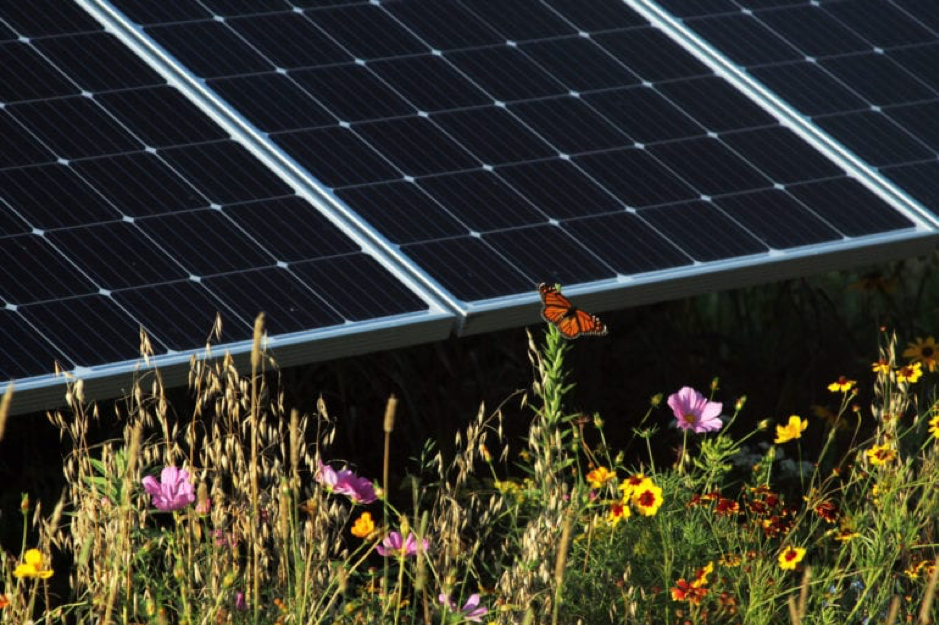 The Evolution Of Rural Solar From Panel Monocrops To Multiple Land Uses In 2020 Green Building Solar Rural