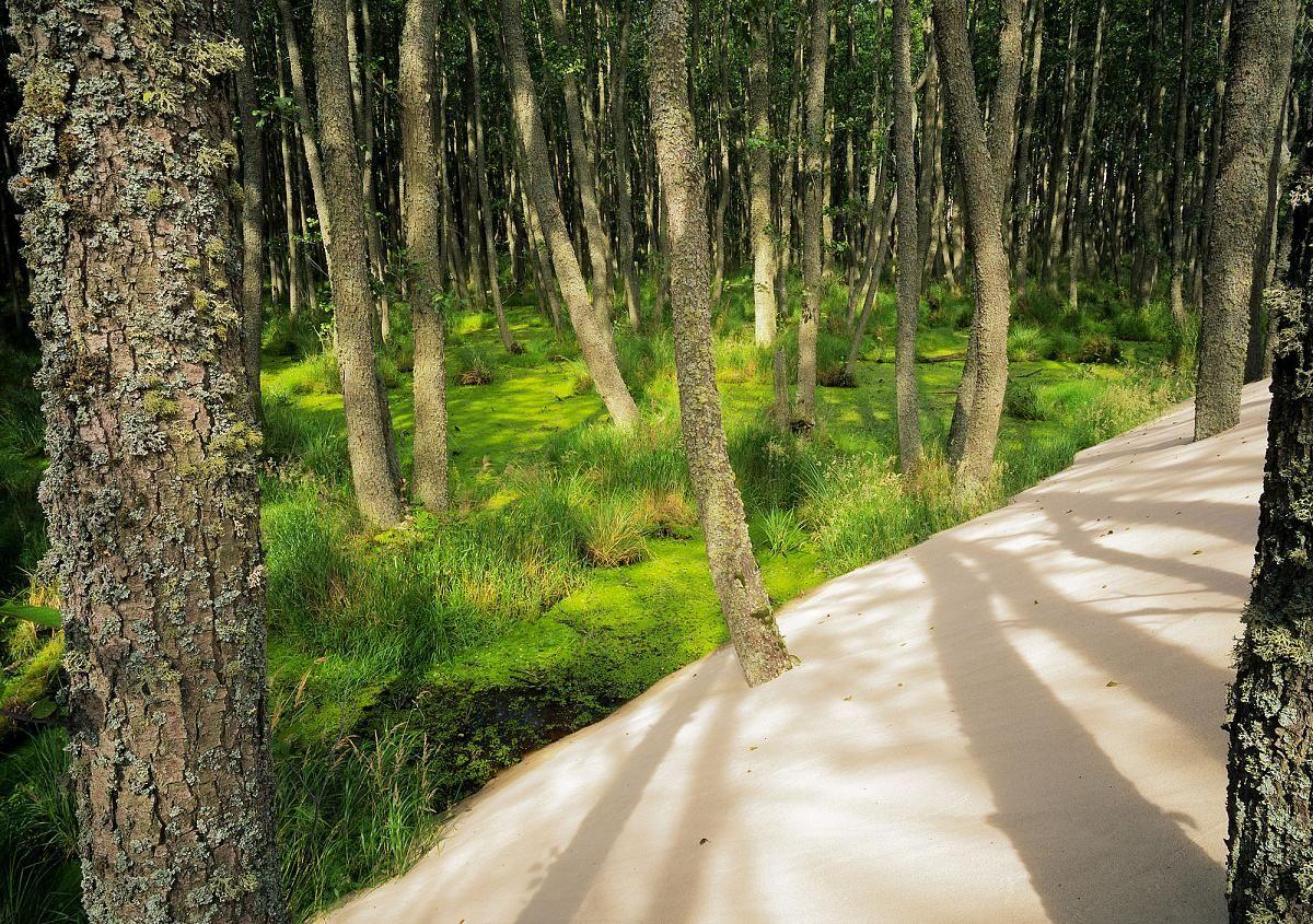 Sand dunes shifting into forest in Słowiński National Park, Pomerania, Poland