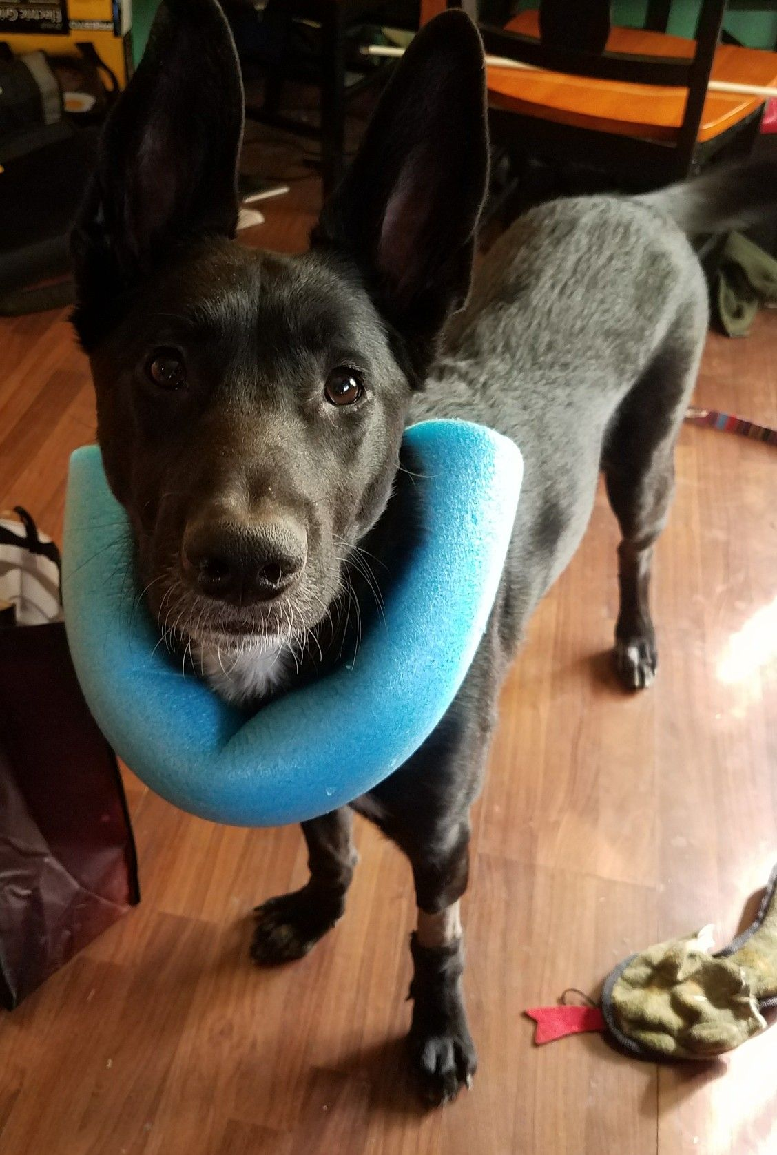 Dyi Dog Cone Pet Dogs Puppies Pets Dog Cone