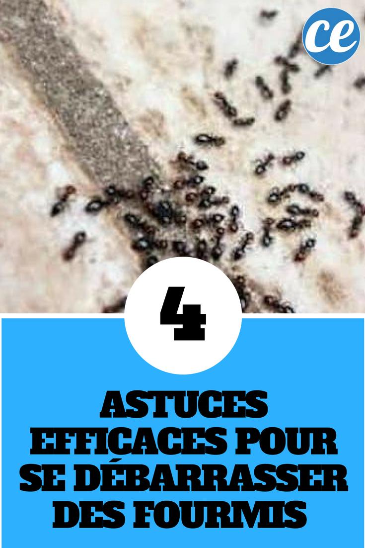 4 astuces efficaces pour se d barrasser des fourmis la maison anti insectes et anti. Black Bedroom Furniture Sets. Home Design Ideas