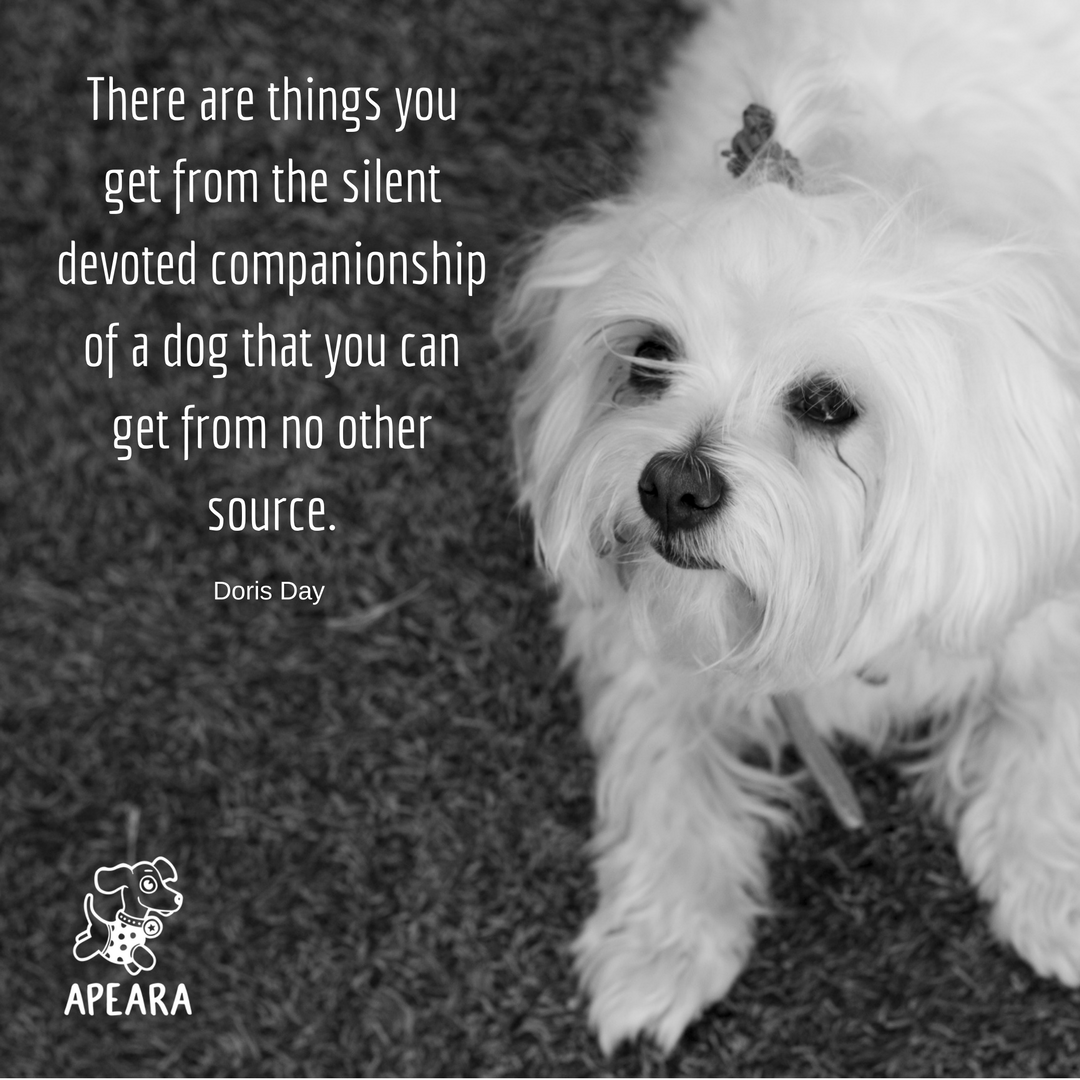 Pin By Apeara Ltd On Favorites Dog Quotes Maltese Dogs Dog Life