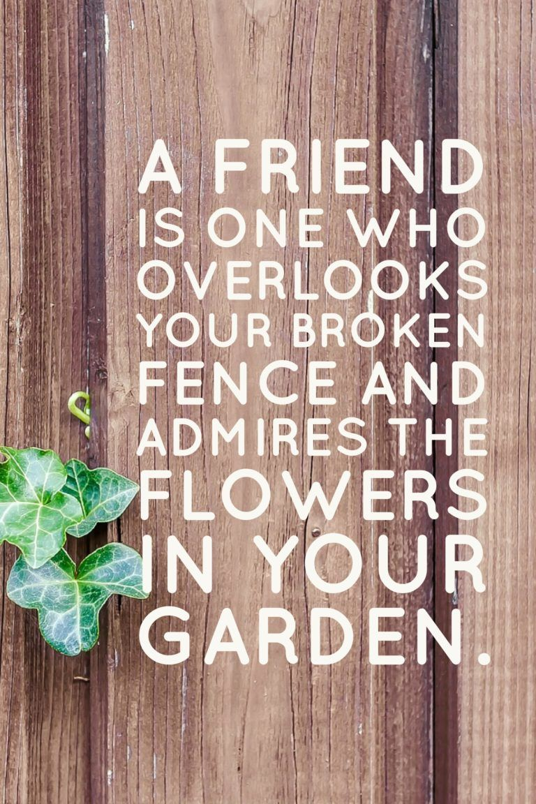 Let S Celebrate Friendship Day My Cup Of Cocoa Friends Quotes Friendship Day Quotes International Friendship Day