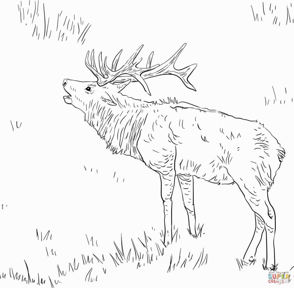 Elk Coloring Pages Animal Coloring Pages Coloring Pages Disney