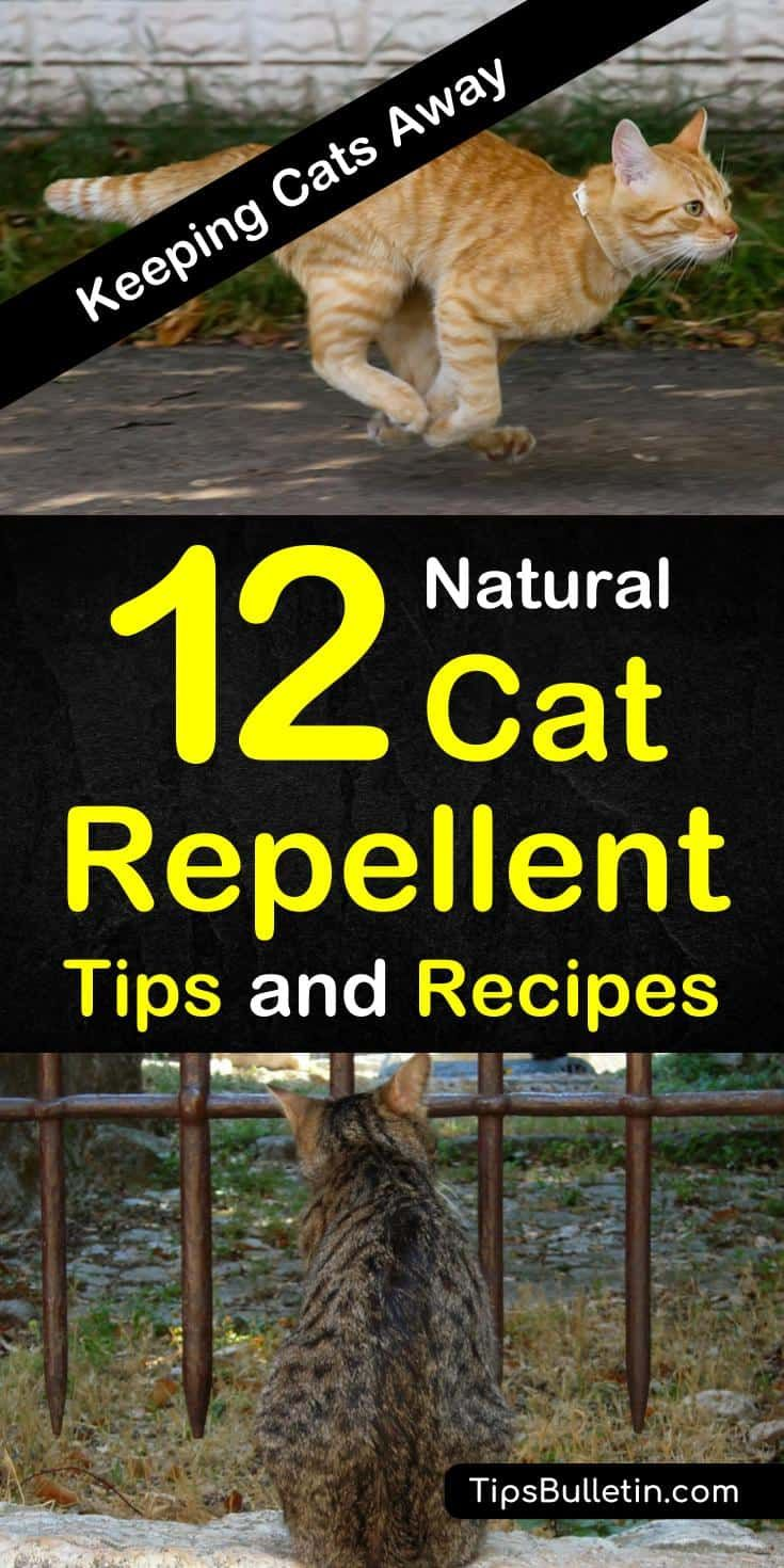 Keeping Cats Away 12 Natural Cat Repellent Tips and