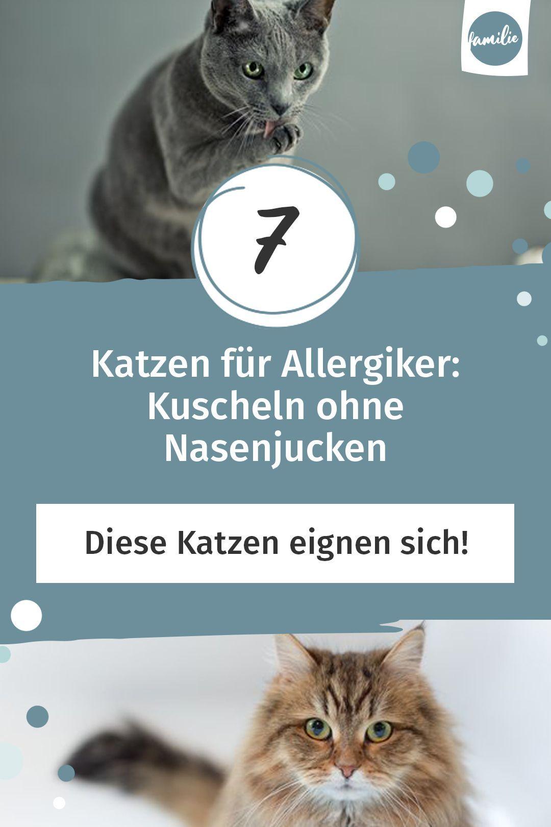 7 Katzen Fur Allergiker Kuscheln Ohne Nasenjucken Familie De In 2020 Katzen Fur Allergiker Katzen Kuscheln