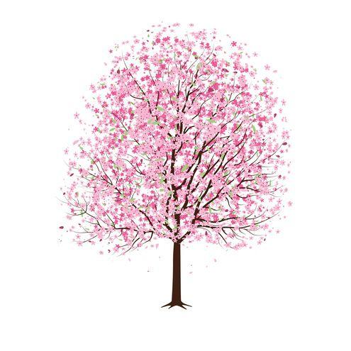 Pink Cherry Blossom Tree Vector Cherry Blossom Tree Tattoo Blossom Tree Tattoo Pink Trees