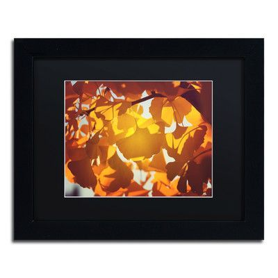Trademark Art 'Ginkgo Leaves' by Philippe Sainte-Laudy Framed Photographic Print Size: 1