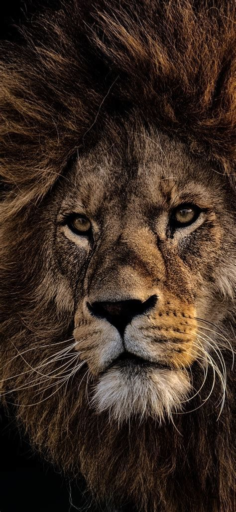 109+ Free Lion Pictures & Images in HD | Sospeed in 2020 ...