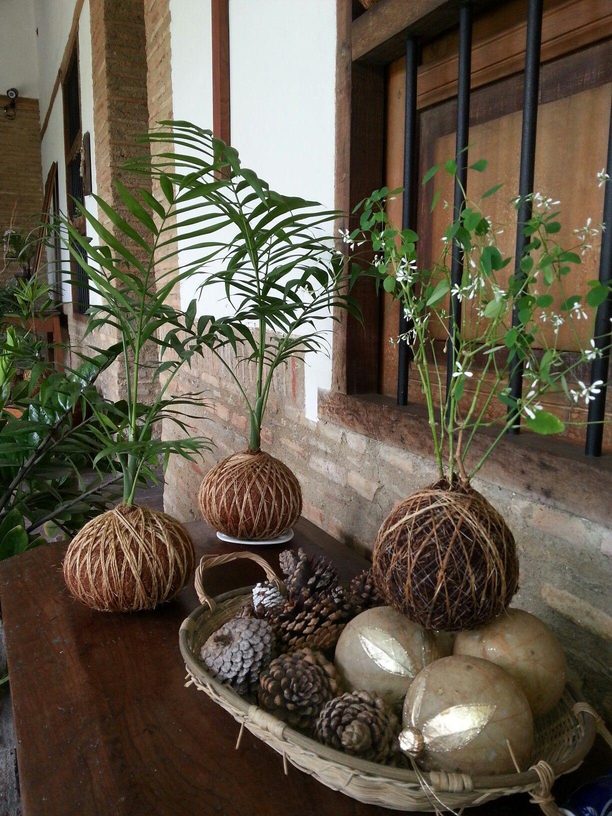 Kokedama perfecto para arreglos en el interior del hogar venezuela jardiner a pinterest - Hogar y jardin castellon ...