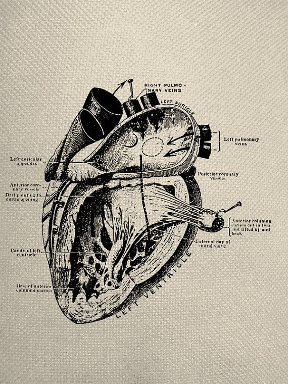 Human Heart    Diagram    Physiology    Engraving    Iron On Tote Bag    Fabric    Transfer Graphic Digital