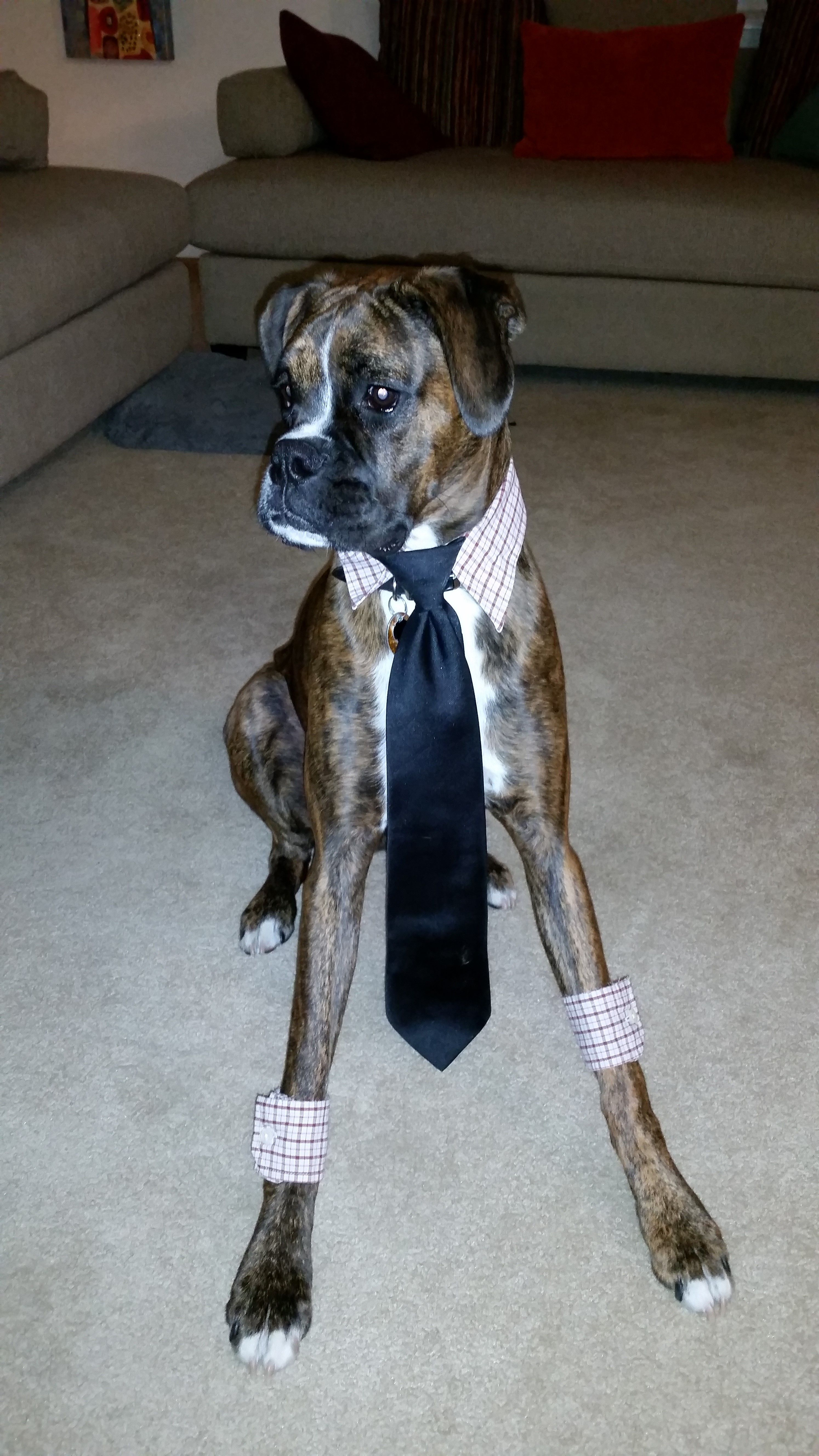 The Executive Boxer