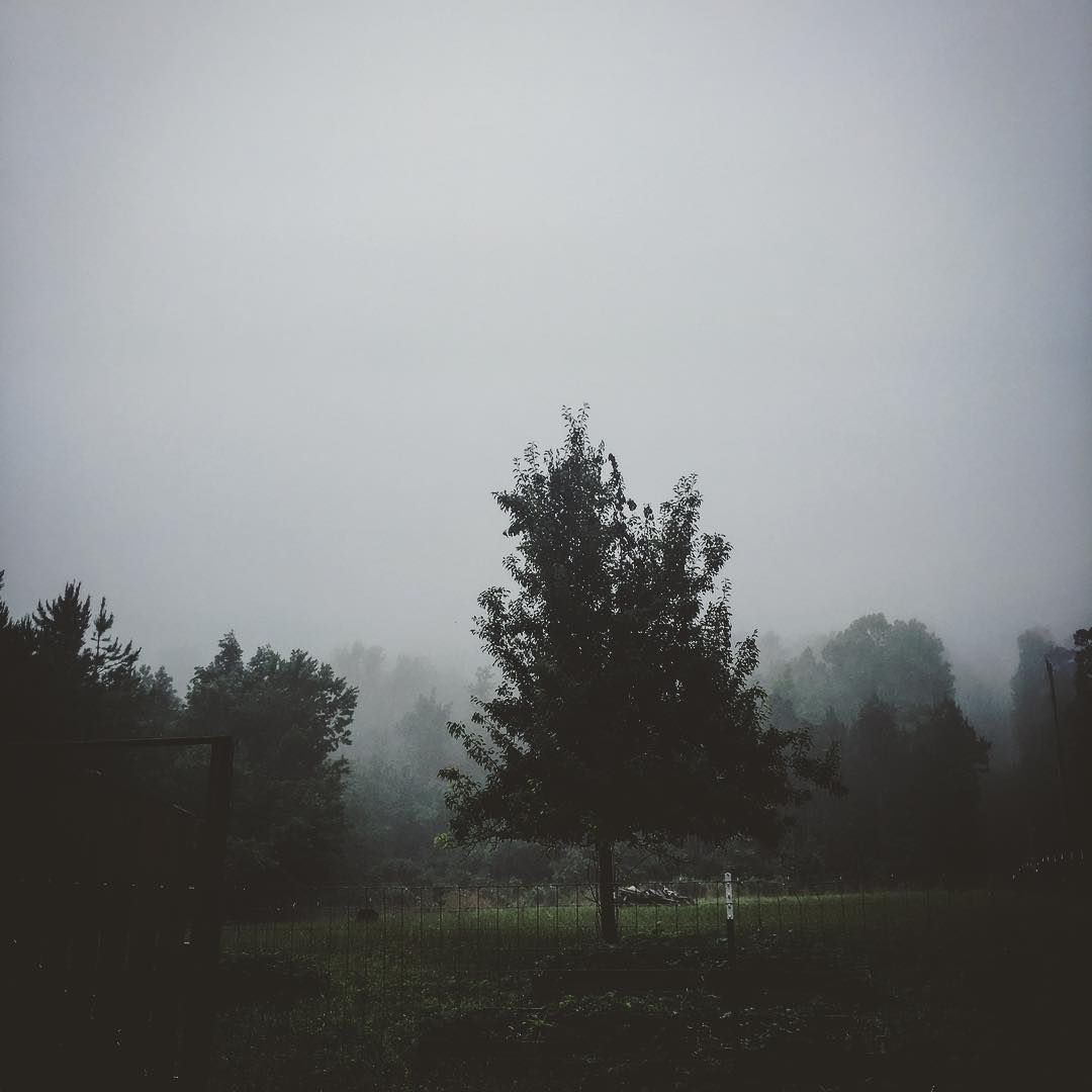A Lone Tree Standing In A Green Fenced In Field Surrounded By Foggy Forest And Gray Overcast Skies Gray Cloudy Ov Sky Aesthetic Foggy Forest Picture Tree