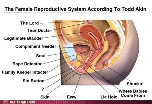 The female reproductive system according to Todd Akin.