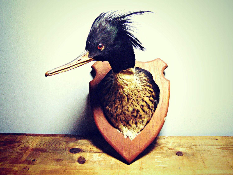 Antique Mount Duck Head Taxidermy Stuffed Bird Mounted
