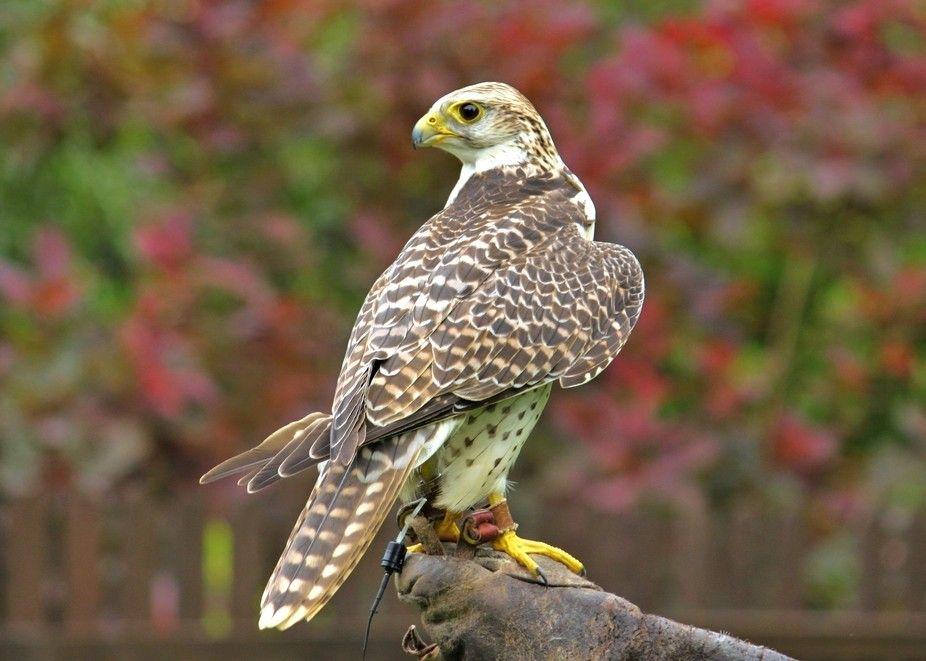Kidderminster Falconry Centre By Jowarren Kidderminster Falconry Animals