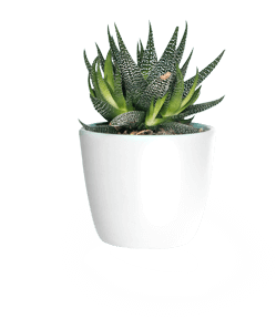 Houseplant Hub Complete Care Guides Helpful Tips Problem Sections Our Readers Personal Experiences And Co Lily Plant Care Peace Lily Plant Care Lily Plants