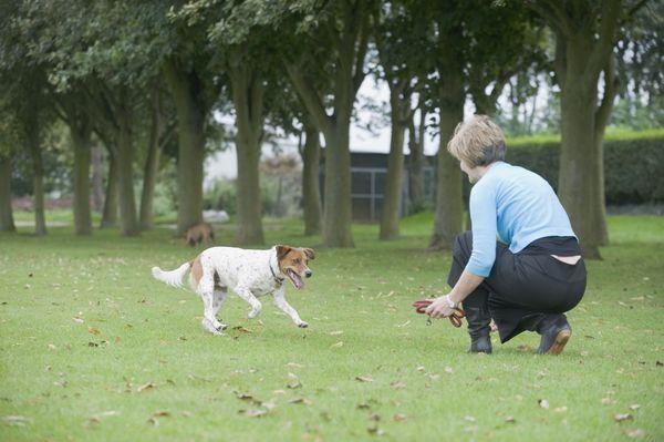 Top 10 Basic Dog Training Commands With Images Dog Training