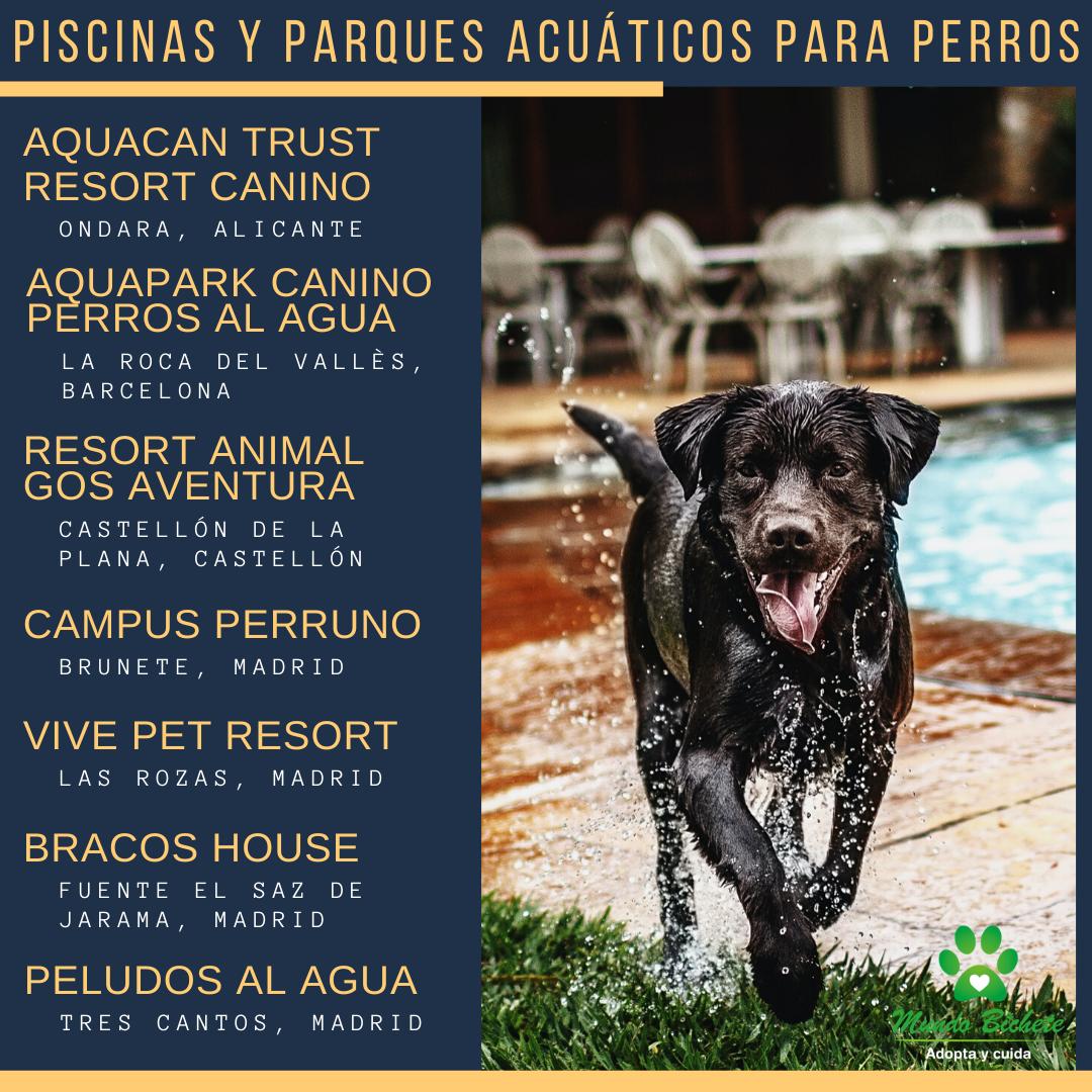 Piscinas Y Parques Acuáticos Para Perros Perros Parque Acuatico Parques
