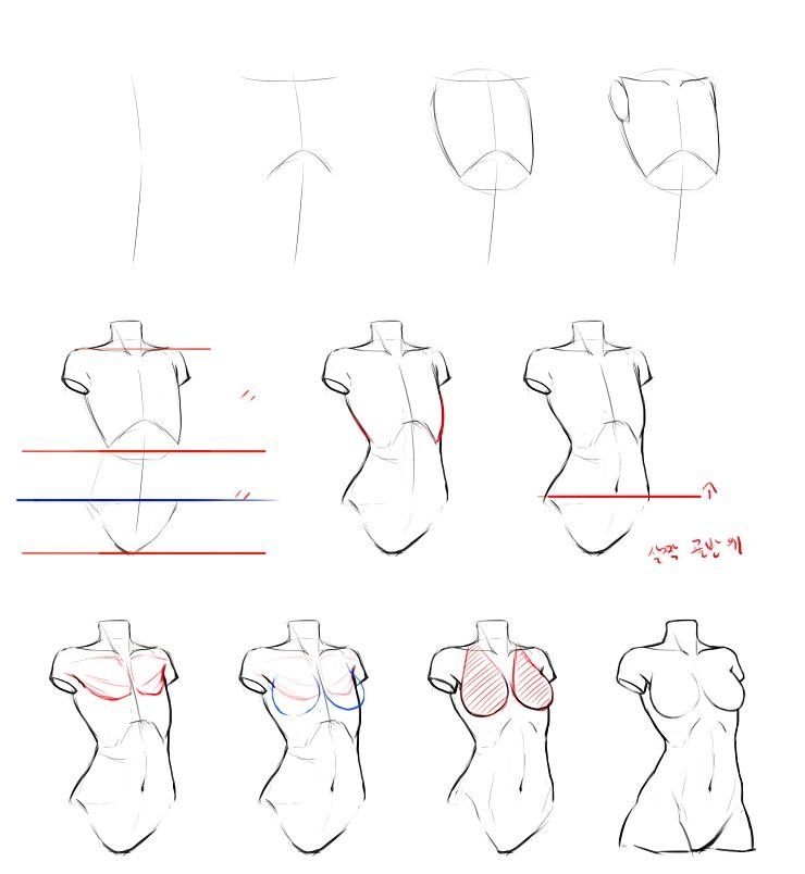 Reference Guide Step By Step Drawing Female Torso Practice