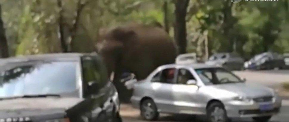 heartbroken elephant destroys cars - Unusual