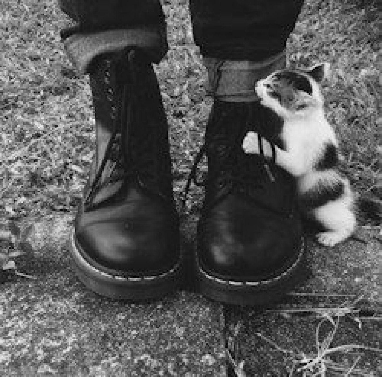 ботинки для кошек: 20 тыс изображений найдено в Яндекс.Картинках