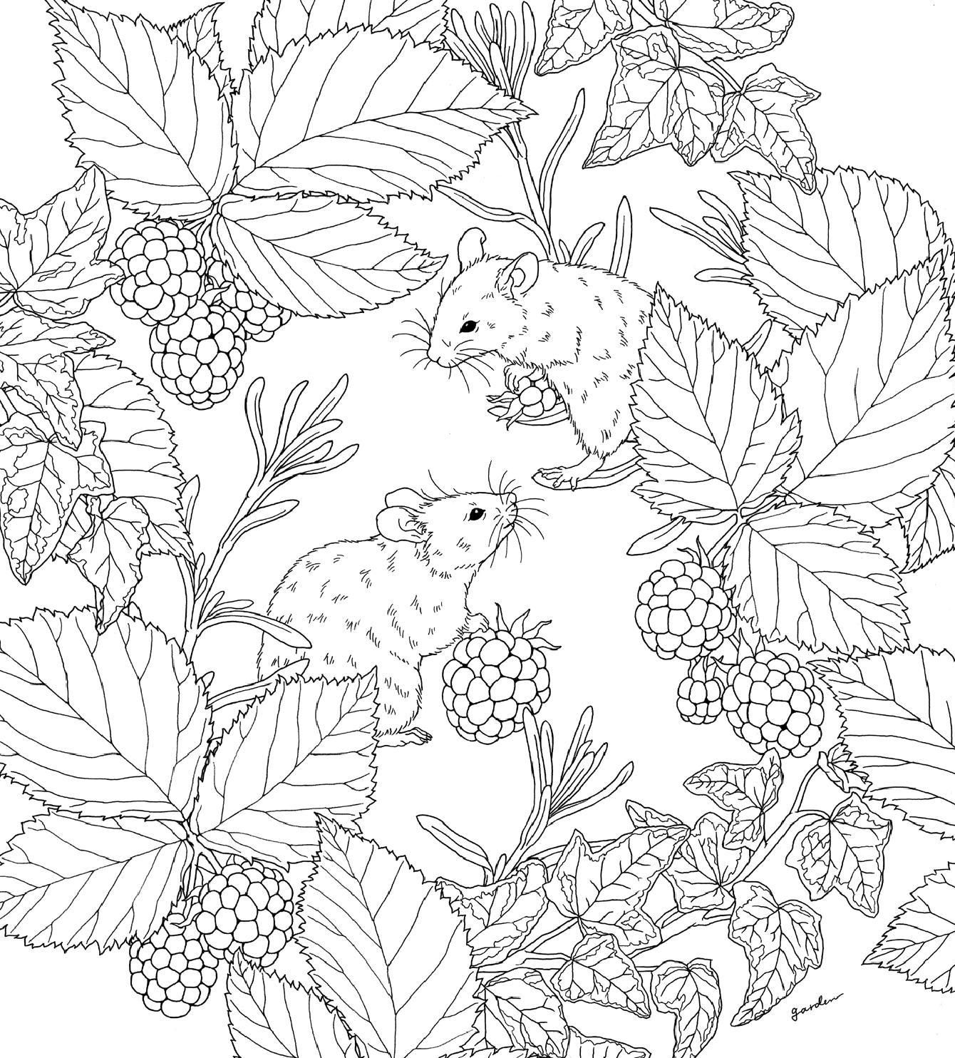Harmony Of Nature Coloring Pinterest Coloring Pages Adult