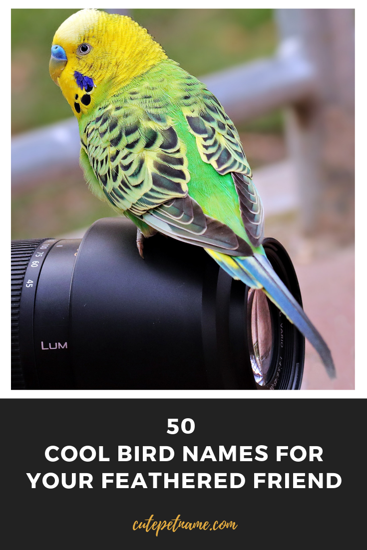 50 Cool Bird Names for Your Feathered Friend Cute