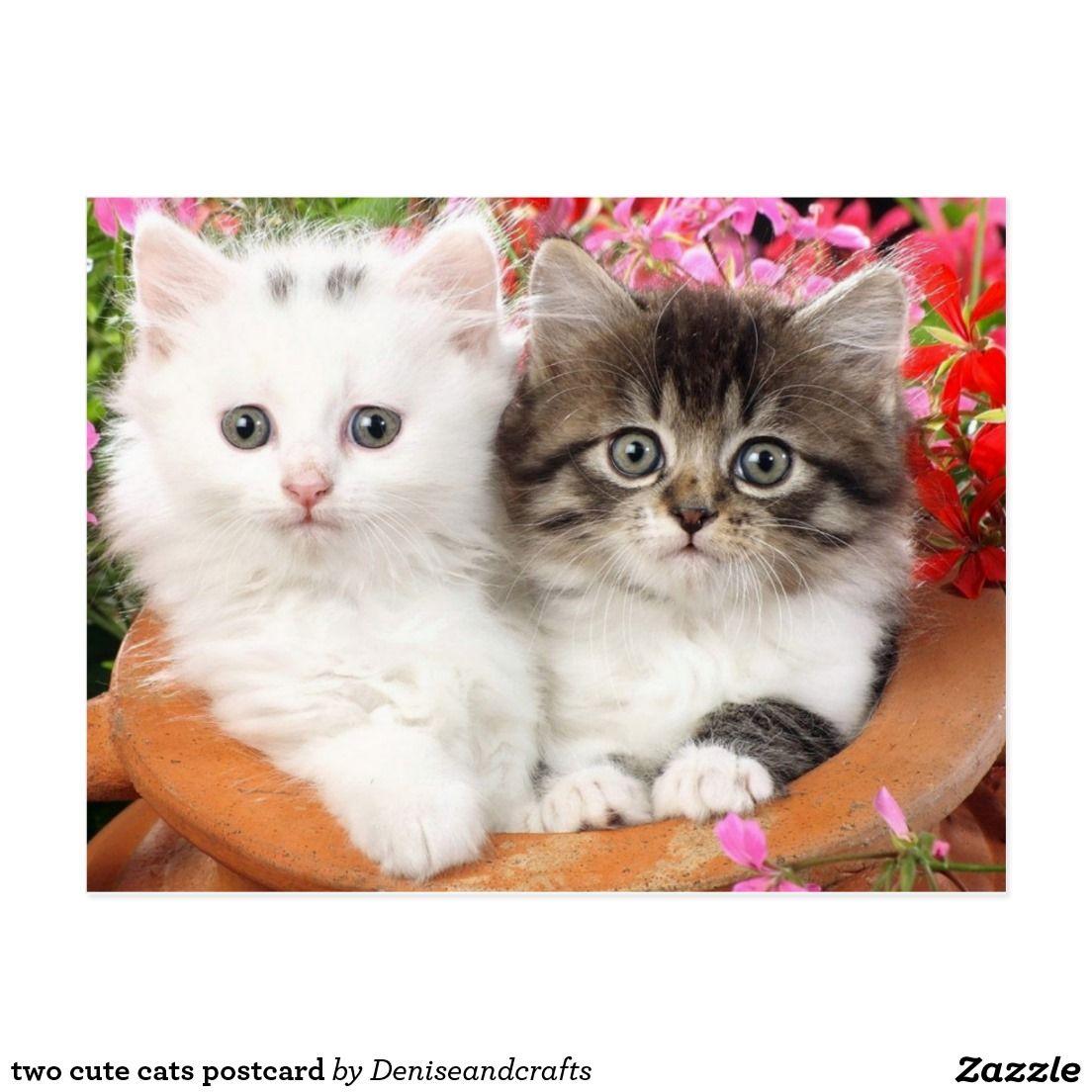 Two Cute Cats Postcard Cute Cat Wallpaper Kitten Wallpaper Beautiful Kittens