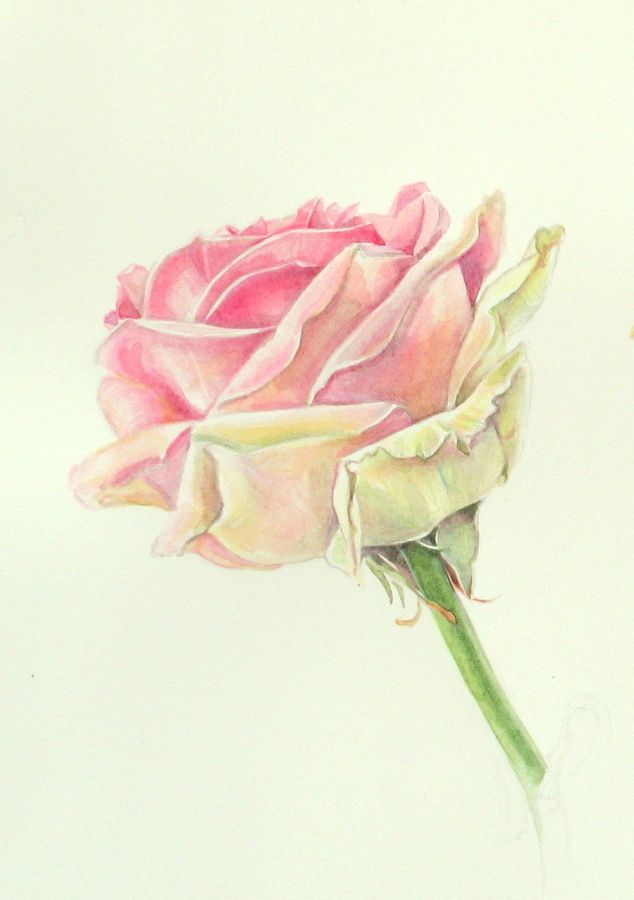 Watercolor Flowers In 2020 Floral Watercolor Watercolor Rose