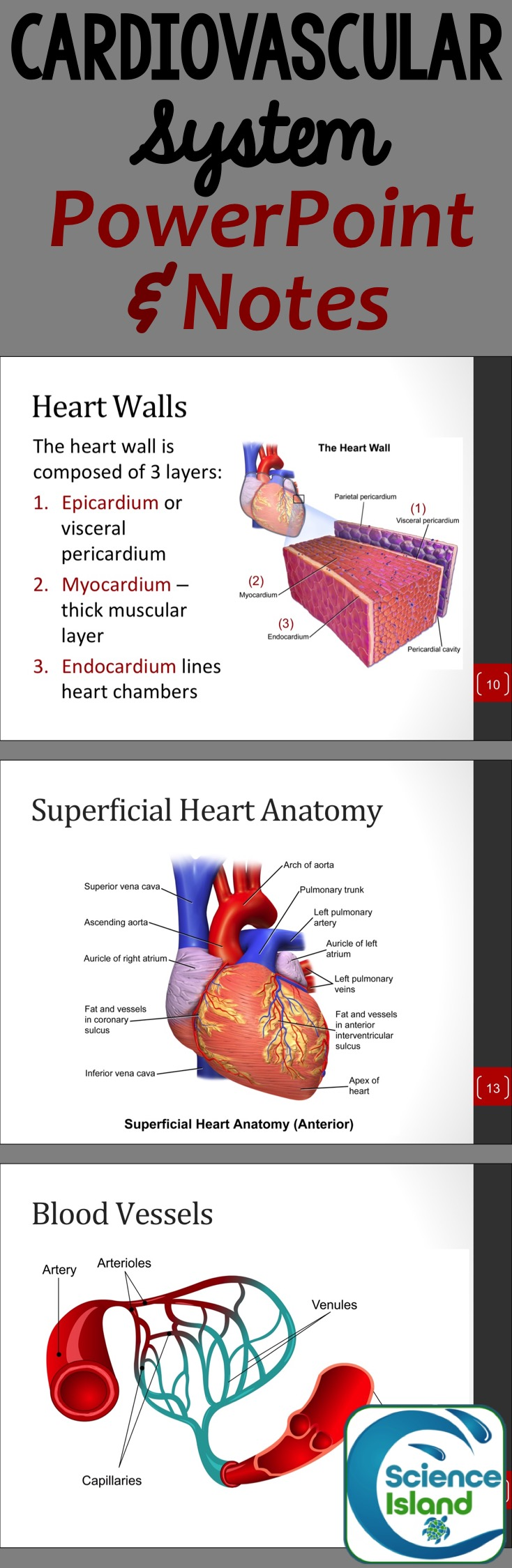 Cardiovascular System PowerPoint and Notes | Pinterest | Textbook ...