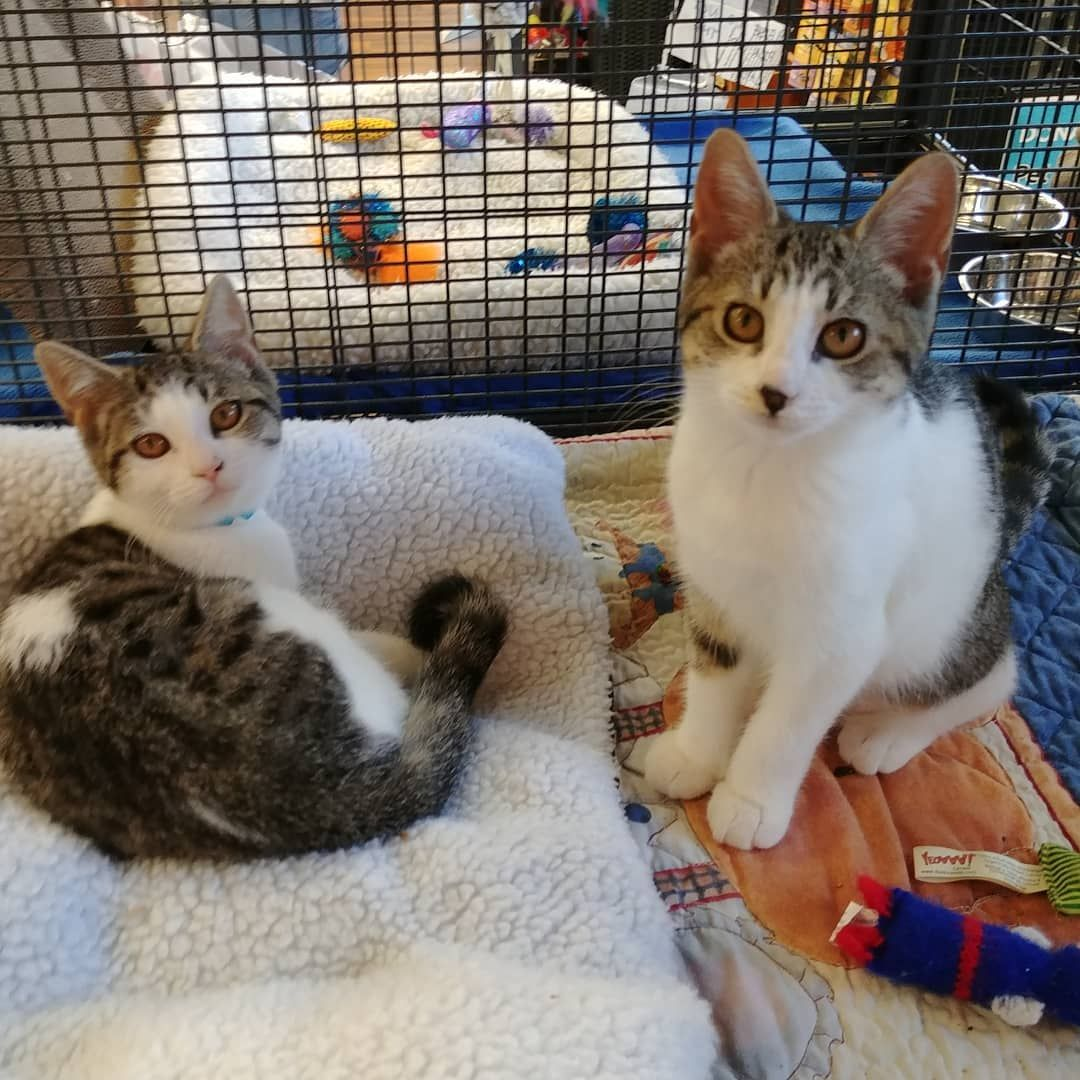Cassandra And Cupcake Are Waiting For You Come Visit Them At Pet Valu Sunrise Center In Kitchener Today They Are Spayed Vacc Animal Help Kittens Cutest Cats