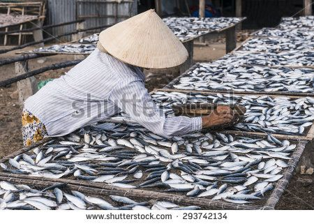 Vietnamese woman drying fishes under direct sunlight - stock photo