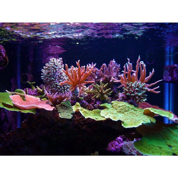 Пин от пользователя bambooshonok на доске reef | Океан