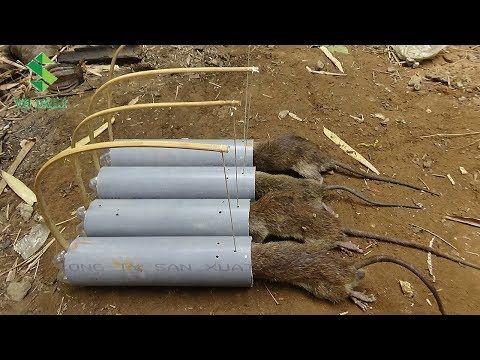Como hacer trampas para ratas con tubos de pvc youtube - Trampas para cazar ratas ...