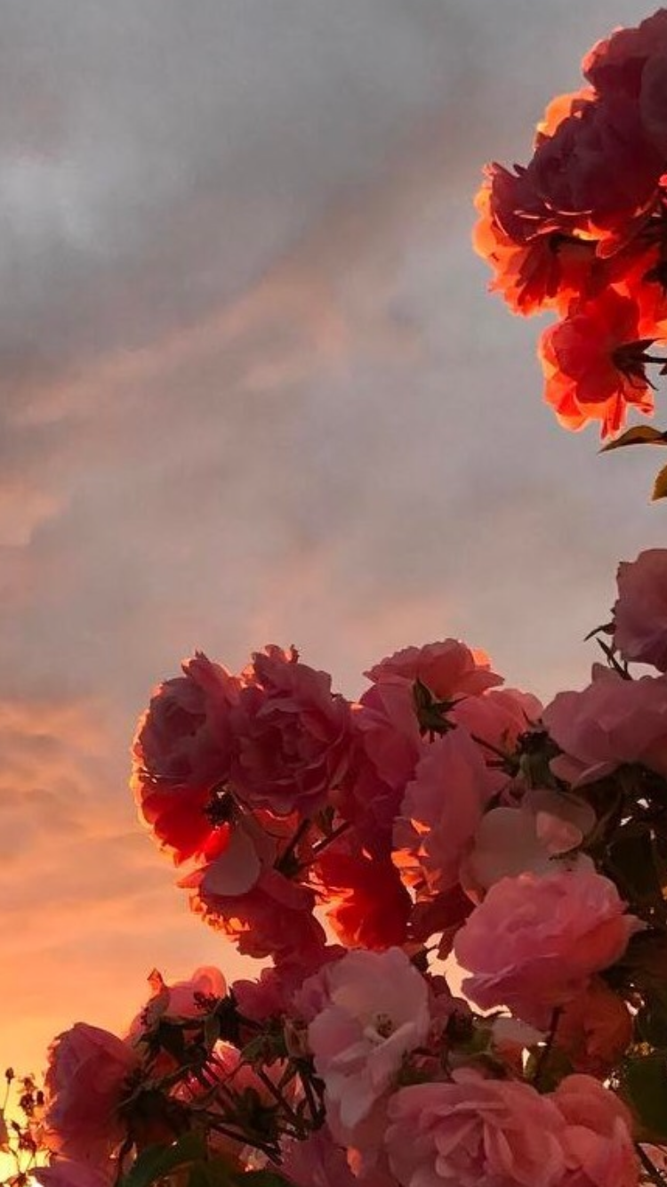 Flower, Sky, Bougainvillea, Petal, Red, Plant