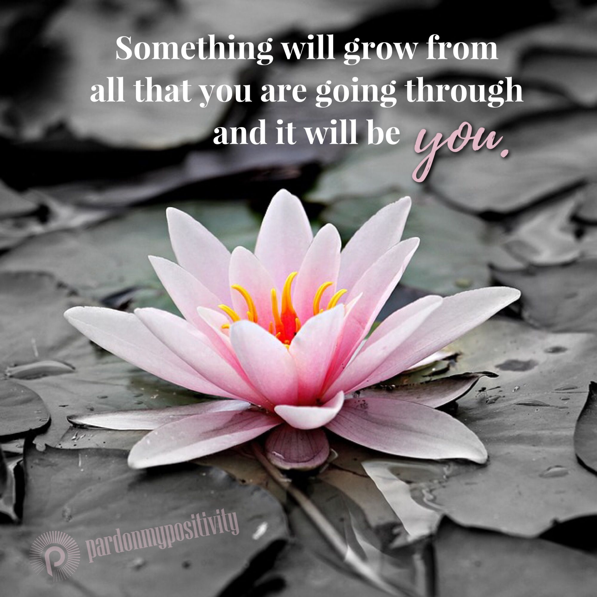 Something will grow from all that you are going through