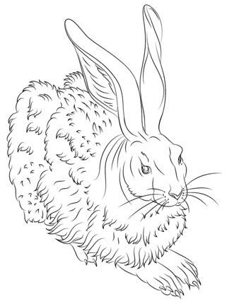 Young Hare 2 By Albrecht Durer Coloring Page Sca Youth Quiet Box