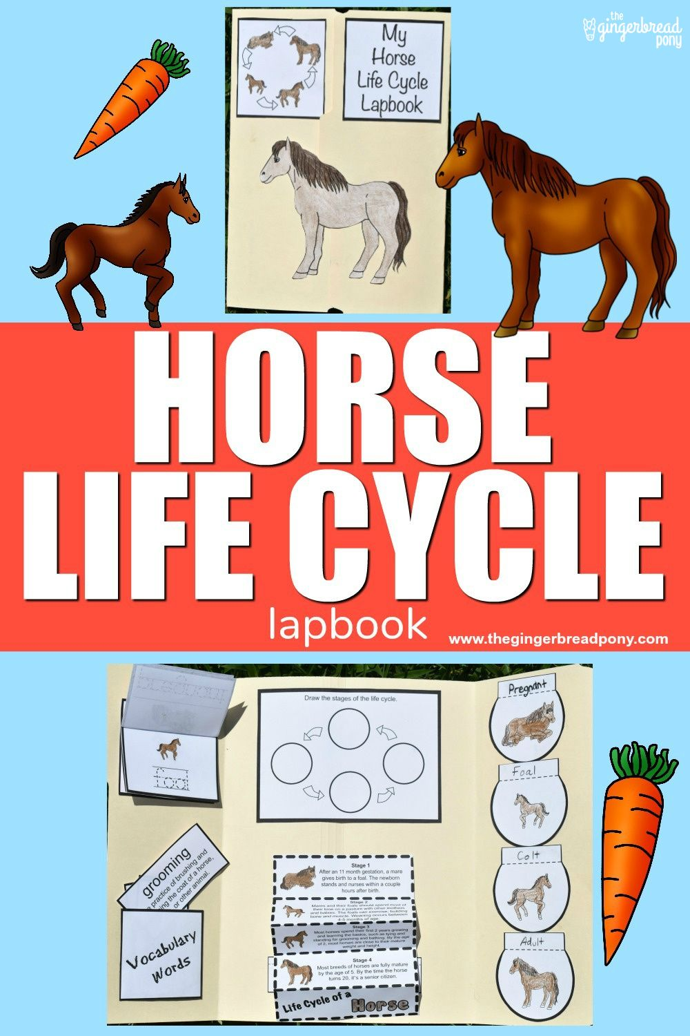 Horse Life Cycle Printable Lapbook Project For Kids Horse Life Life Cycles Lapbook [ 1500 x 1000 Pixel ]