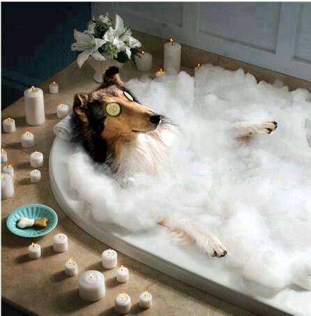 Wellnes Funny Dog Pictures Dog Spa Dog Holiday