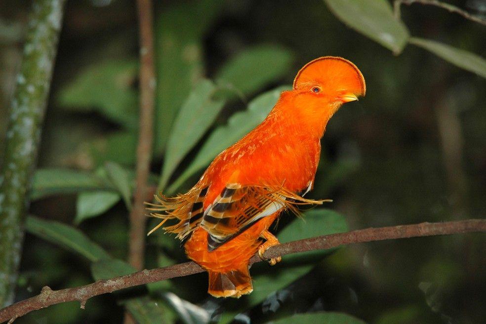 Floresta Amazonica Abriga Cerca De 20 De Toda A Fauna Do Planeta Especies De Peixes Especies De Aves E Novas Especies