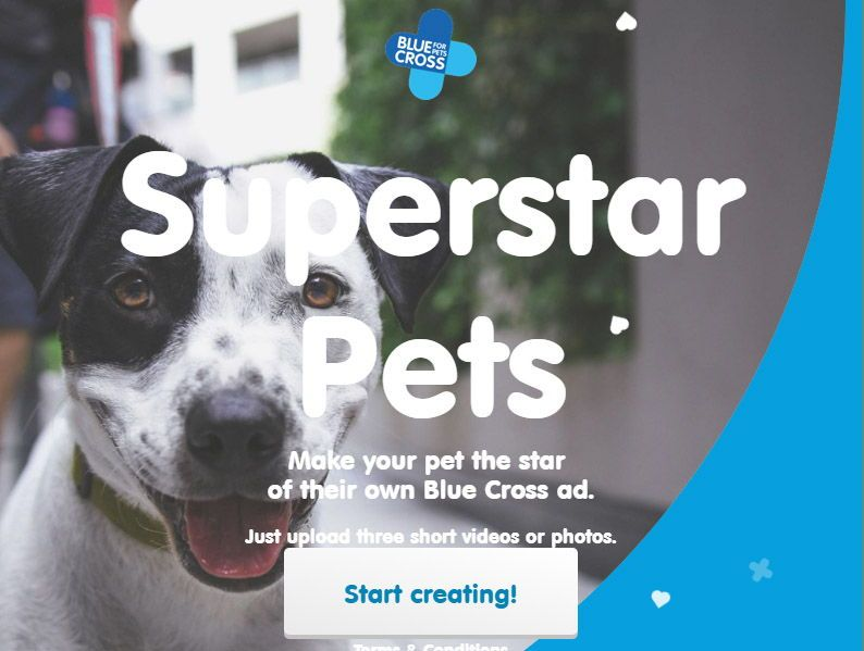 Home Your Pet Pets Animal Charities