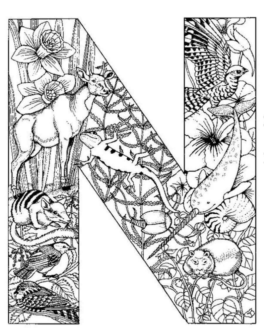 Detailed Coloring Pages Printable Free Intricate Coloring